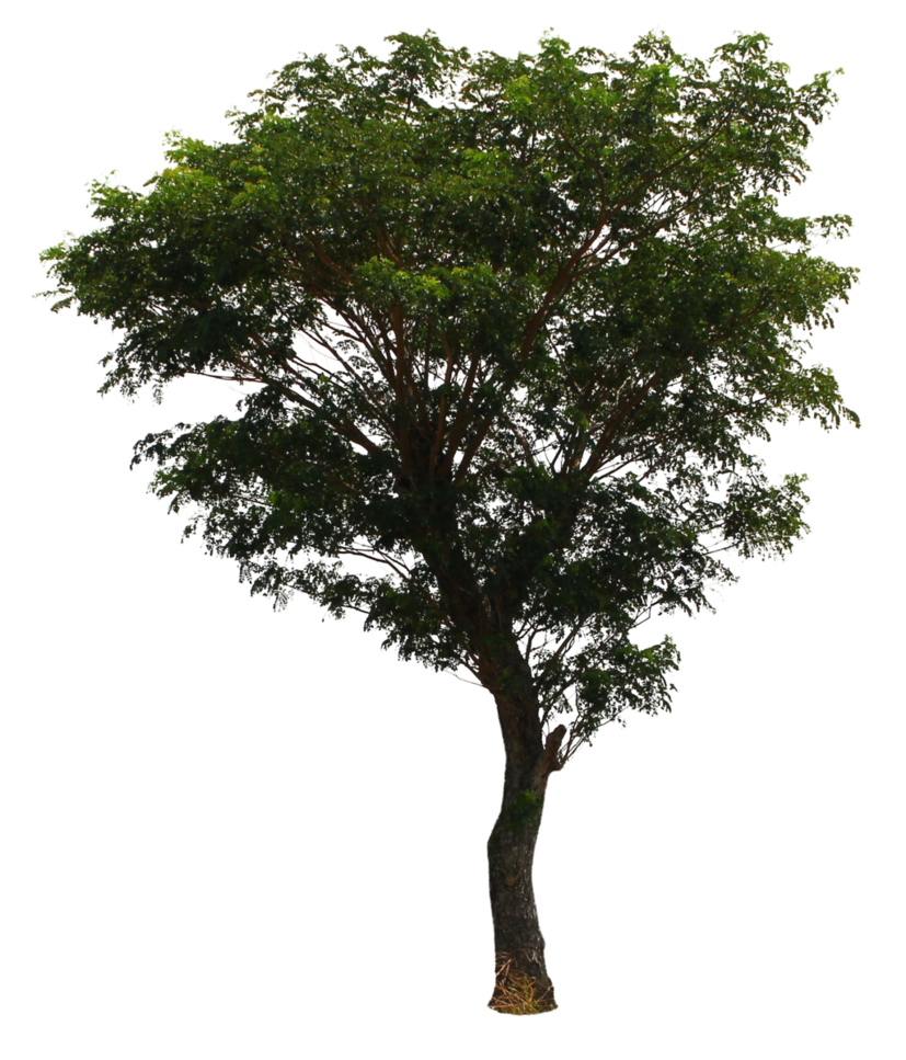 Tree PNG Transparent Images.