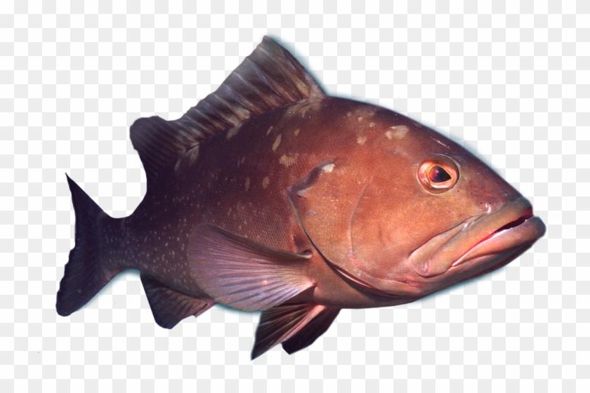 Deep Sea Grouper Fishing Charters.