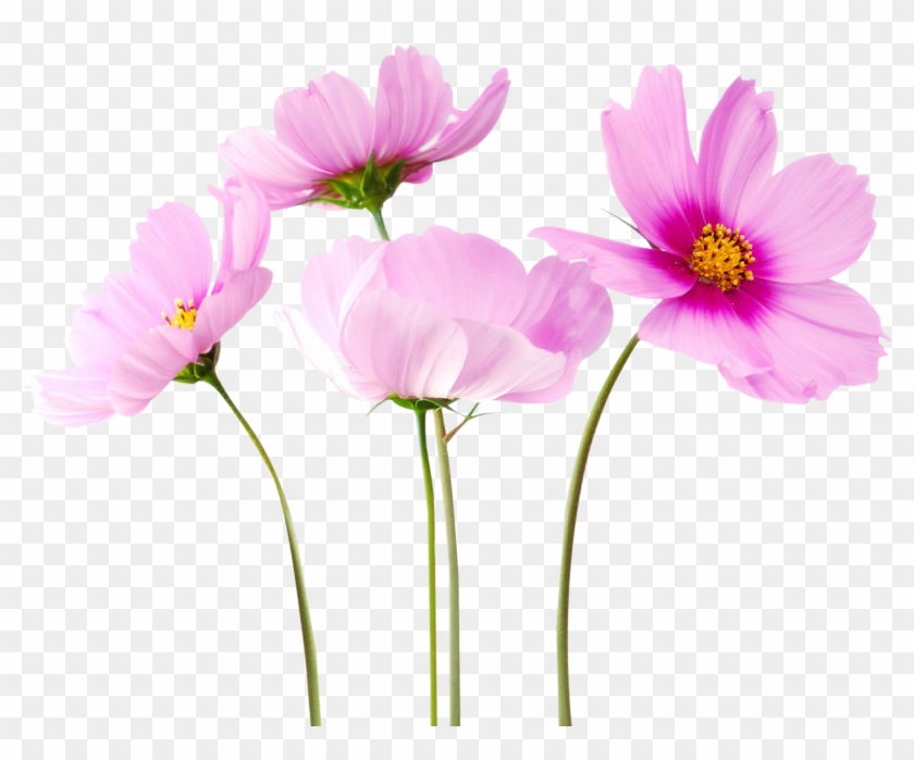 Flowers Png Free Download.