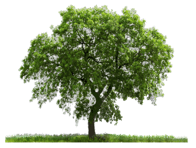 Part01] HD Tree PNG Zip File For Photoshop and PicsArt.