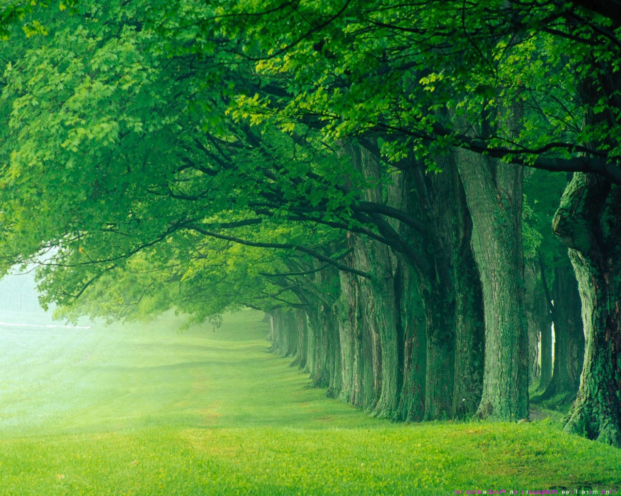 Beautiful Green Forest Background.