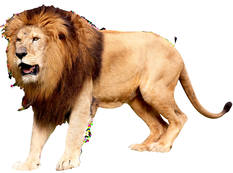 Roaring Lion Png image #42273.