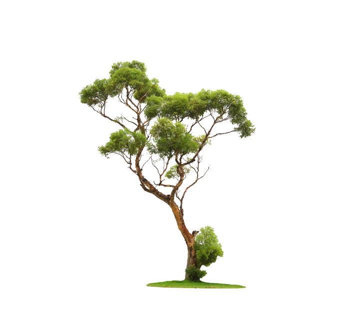 Transparent Tree PNG Image Free Download searchpng.com.