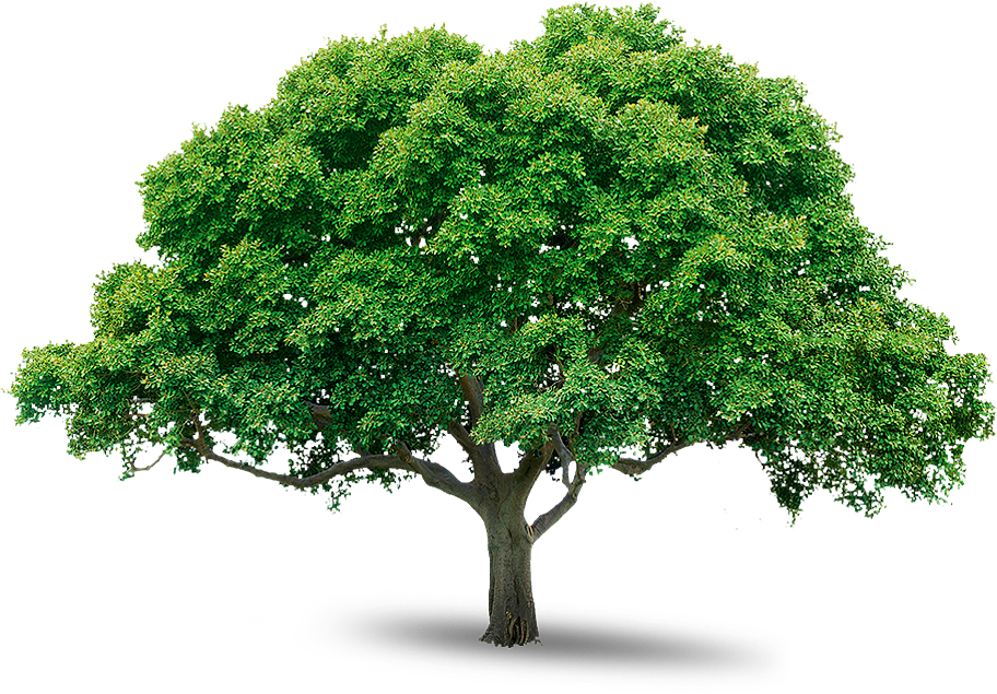 Tree Icon Download #730.