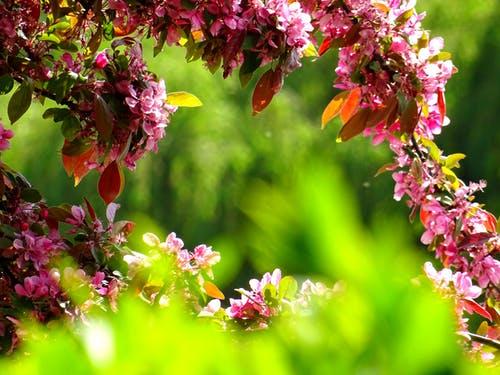 1000+ Interesting Garden Photos · Pexels · Free Stock Photos.