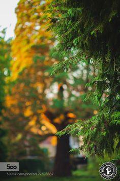 garden blur background hd.