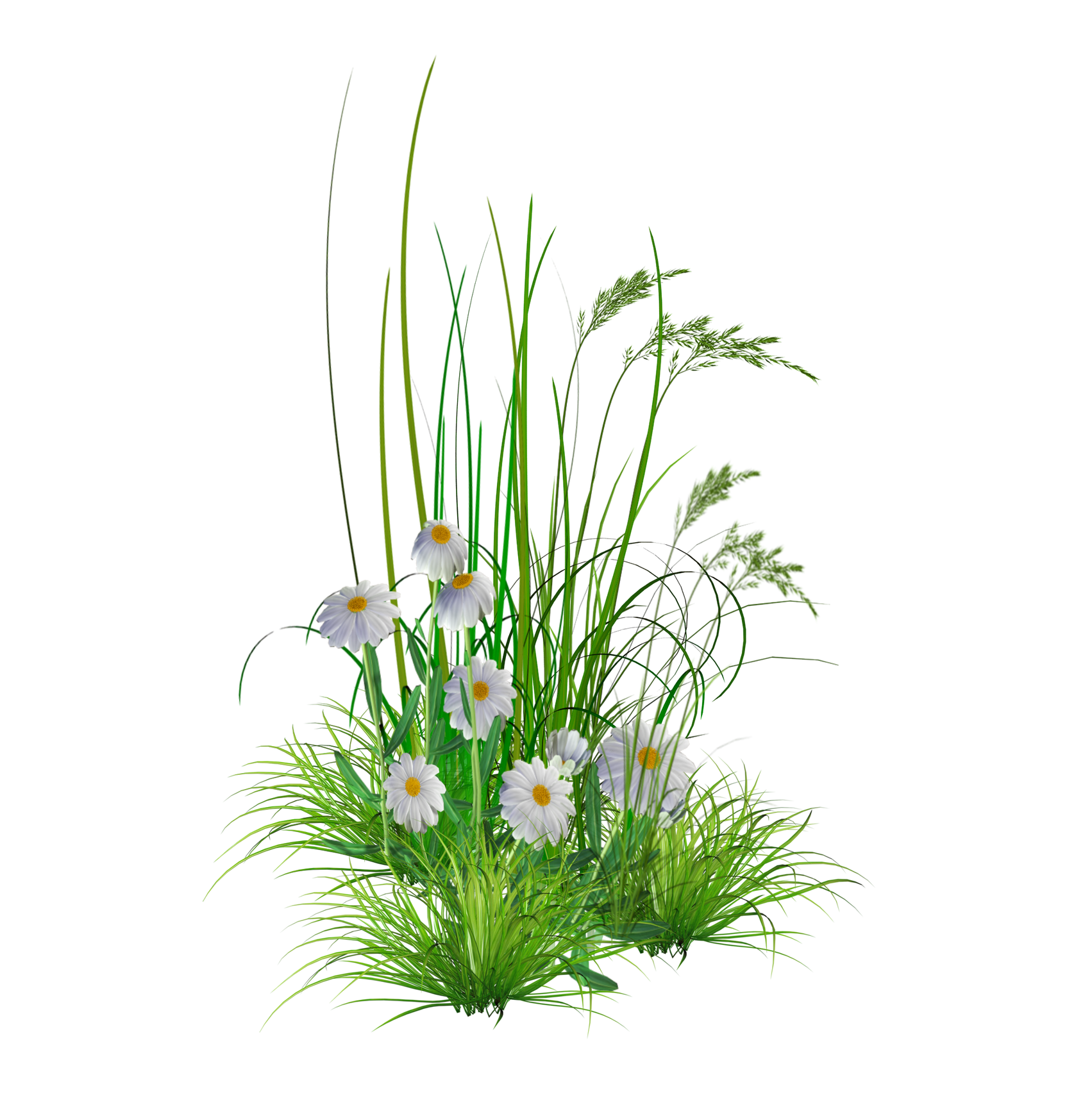 Flower garden Lawn Clip art.