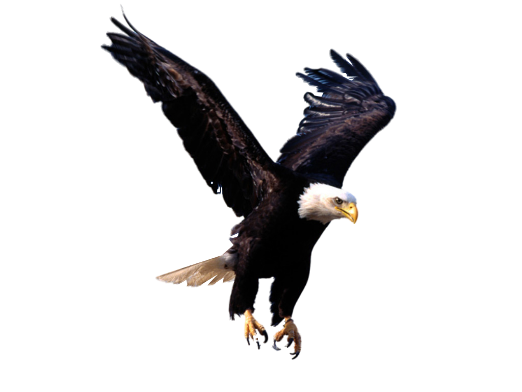 Eagle HD PNG Transparent Eagle HD.PNG Images..