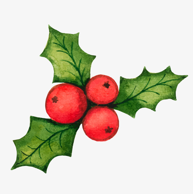 Christmas Holly Decorations Vector Mater #51709.