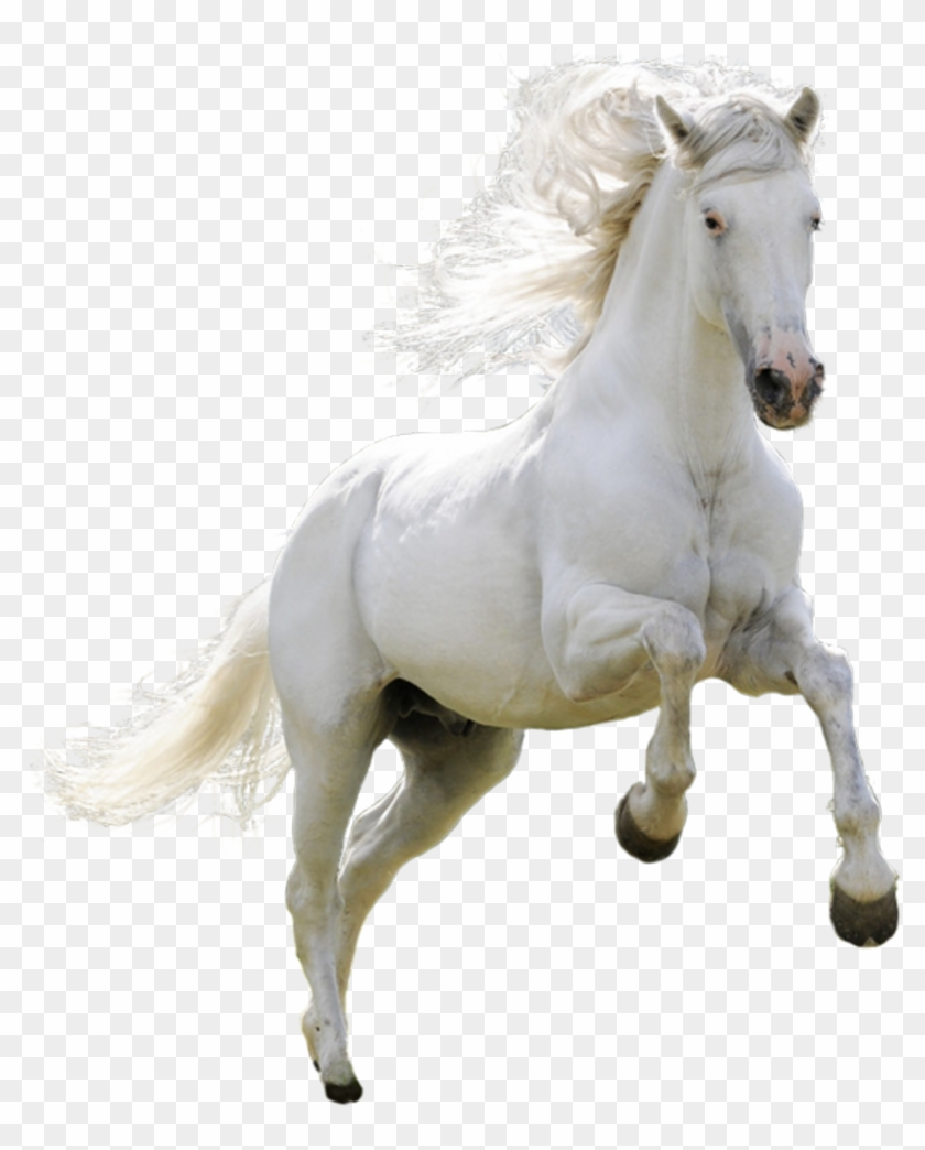 White Horse Png.