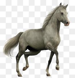 Horse, Horse Clipart, Horse, Whitehorse #41786.