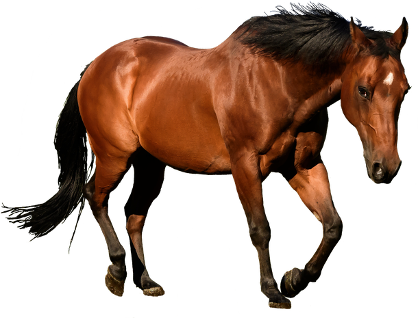 Horses Png Images & Free Horses Images.png Transparent.