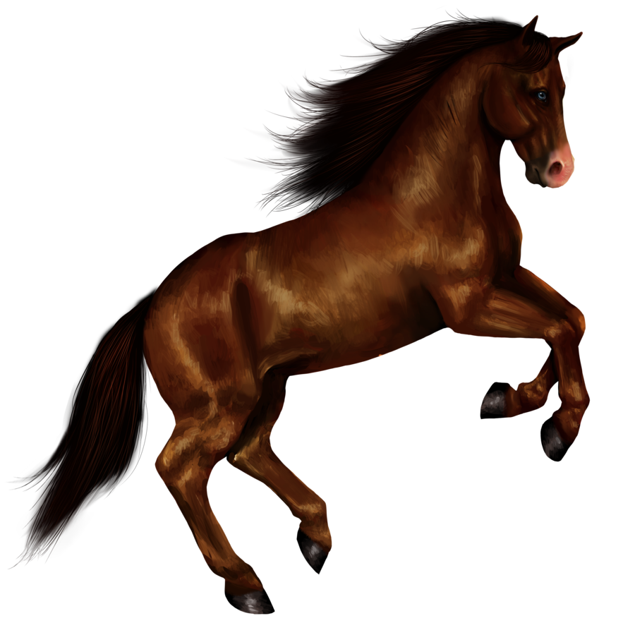 Download Horse PNG 8.
