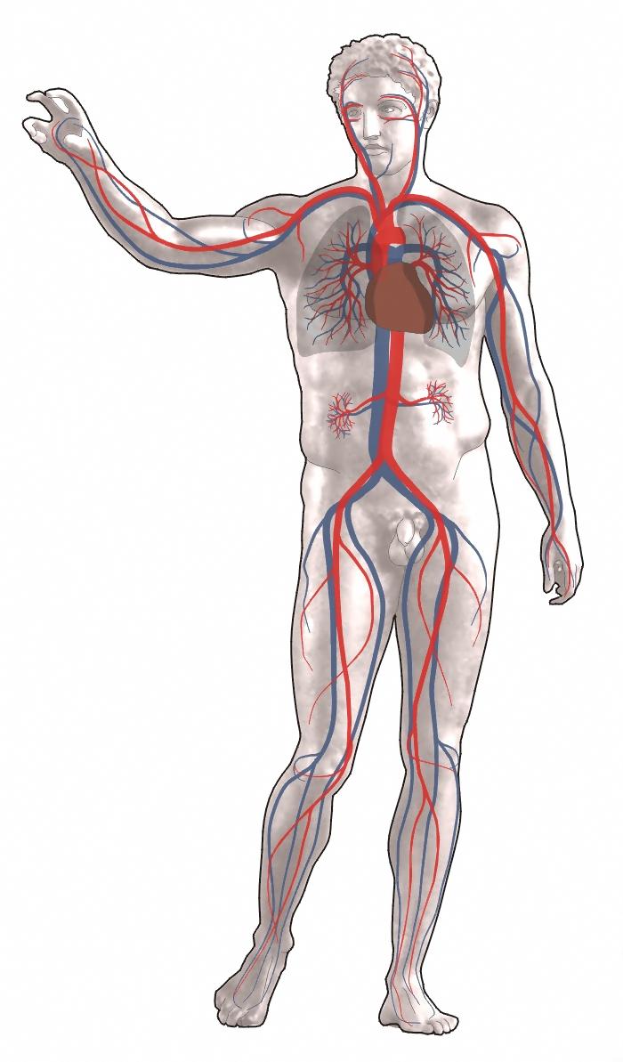Human Body.png #2113.