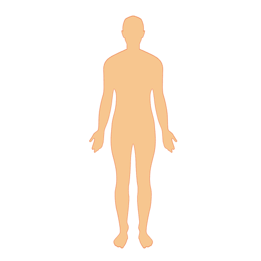 Human body man.