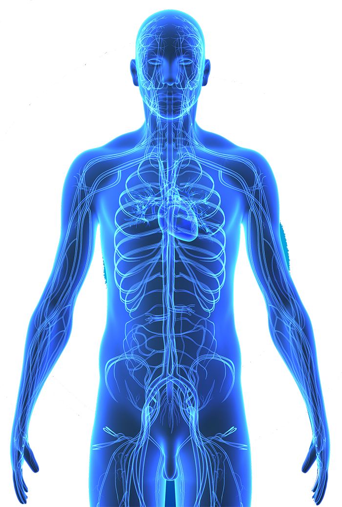 Human Body Png (105+ images in Collection) Page 1.