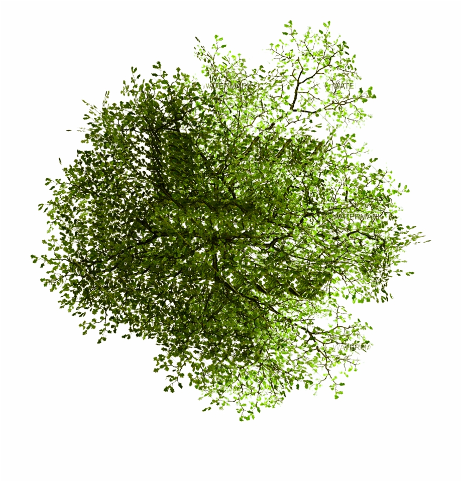 Tree In Plan Png Free PNG Images & Clipart Download #993771.
