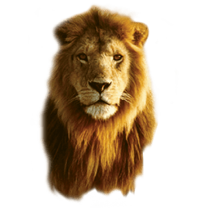 Lions head no background PNG image.