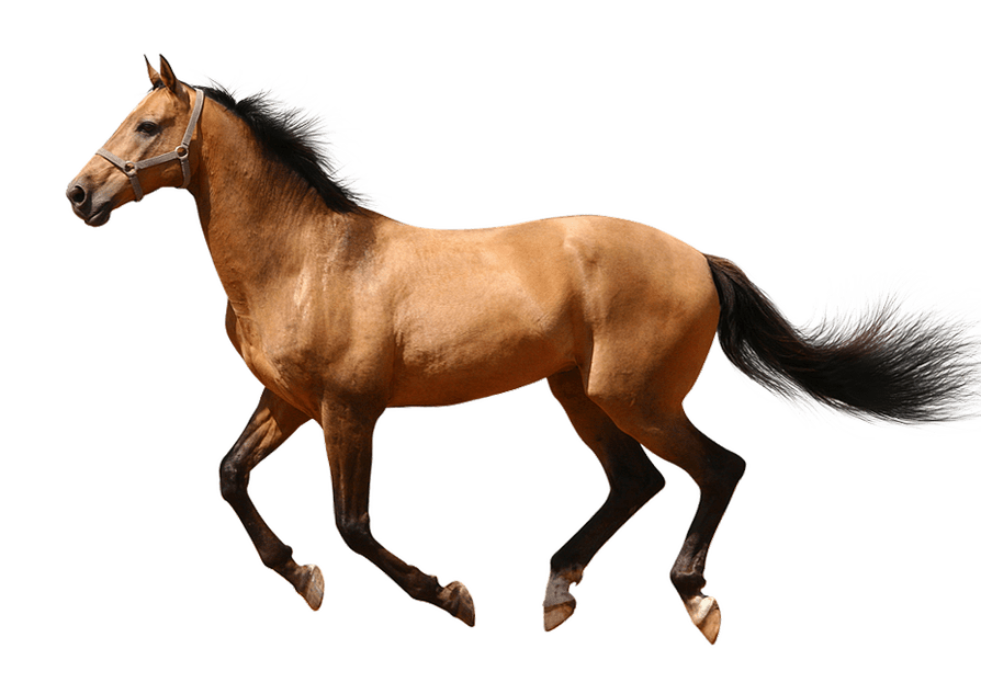 Running horse no background image web design graphics.