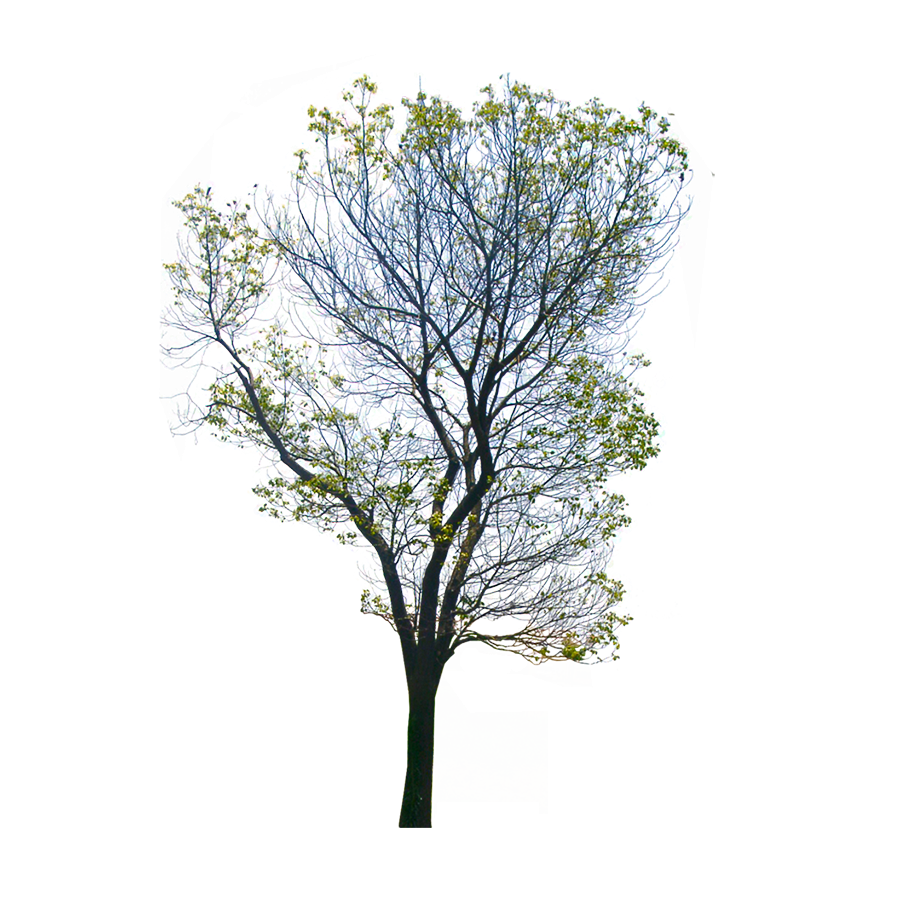 Download Free png wild tree png transparent background image.