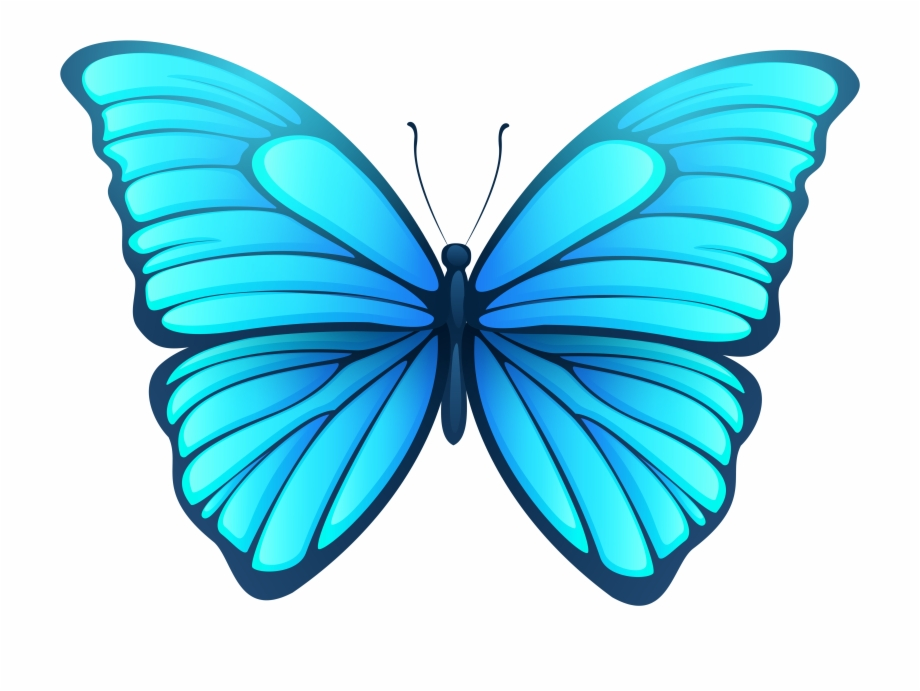 Butterfly Png Images.