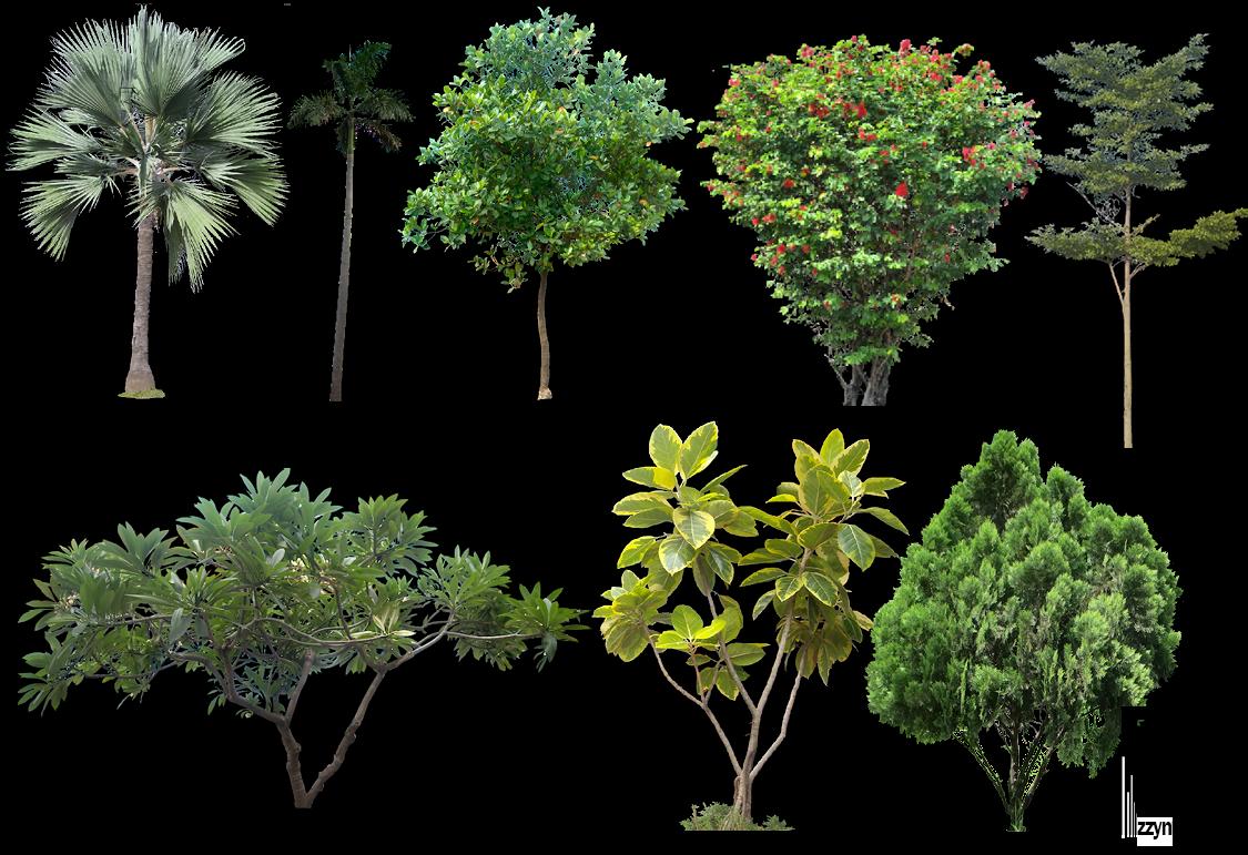 Badmash Prk Editing Zone: Green Grass & Tree PNG.