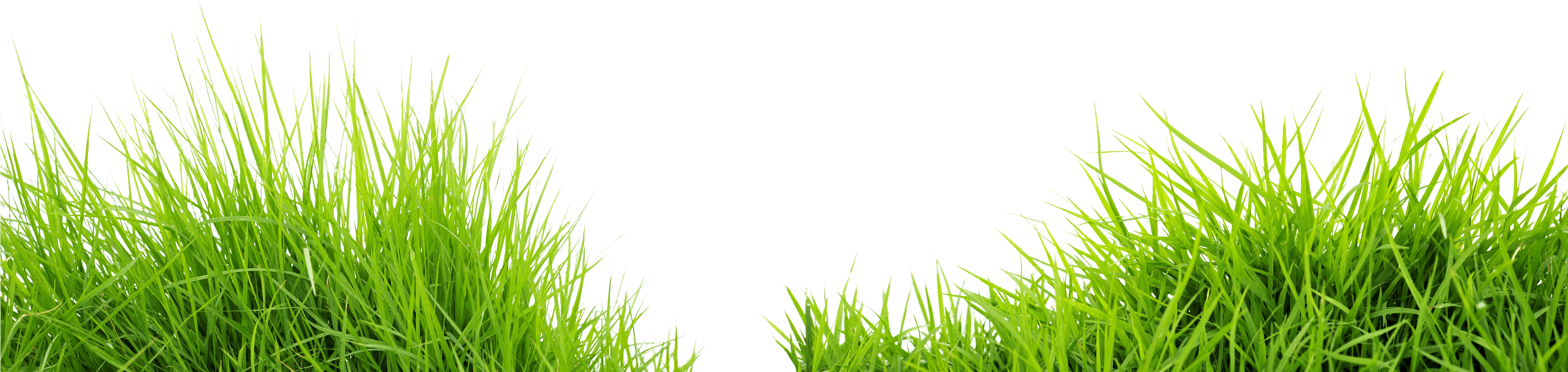 Download Grass Png Image Green Grass Png Picture HQ PNG.