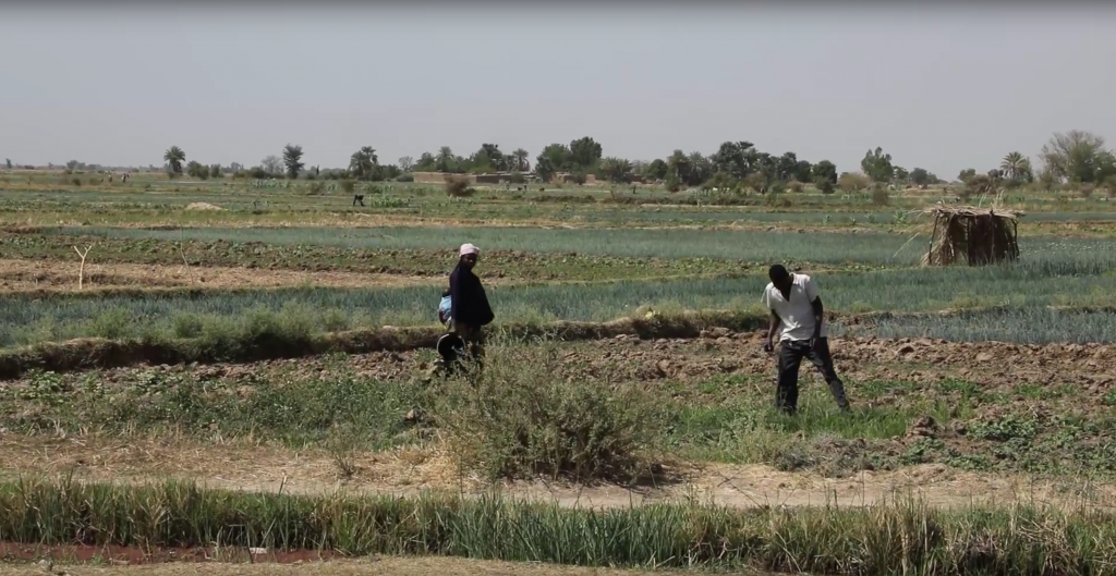 Mali\'s new agricultural land law paves the way for scaling.