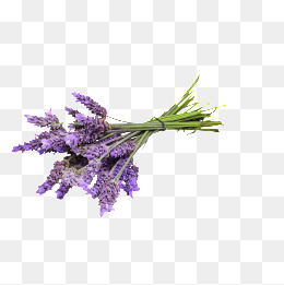 Lavender Png (111+ images in Collection) Page 3.