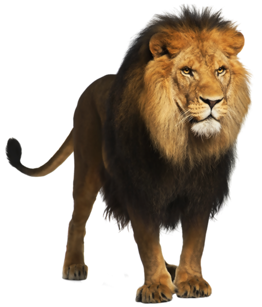 Lion PNG Picture.