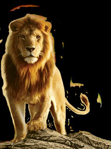 Lion PNG Transparent Images.