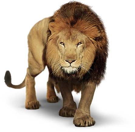 Lion PNG Transparent Images.