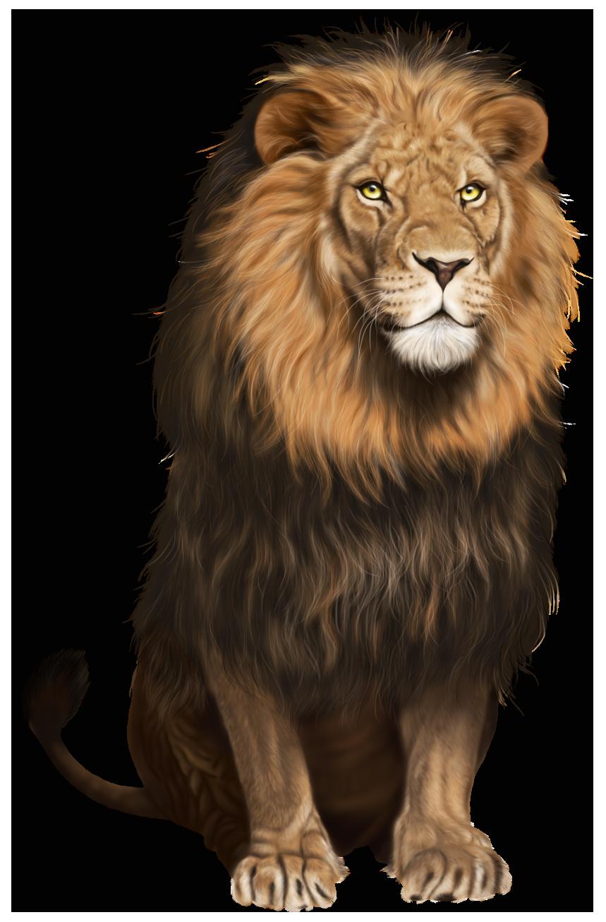 Lion HD PNG Transparent Lion HD.PNG Images..