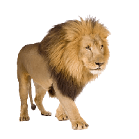 Download Lion Free PNG photo images and clipart.