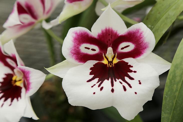 Photo Essay: Hawaiian Grown Orchids.