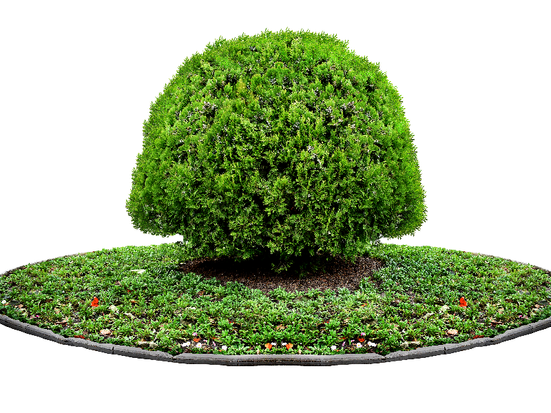 Tree PNG Plant For Photoshop (Isolated.