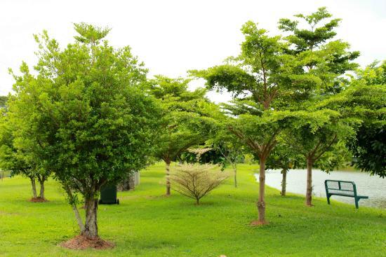 plenty of trees inside.