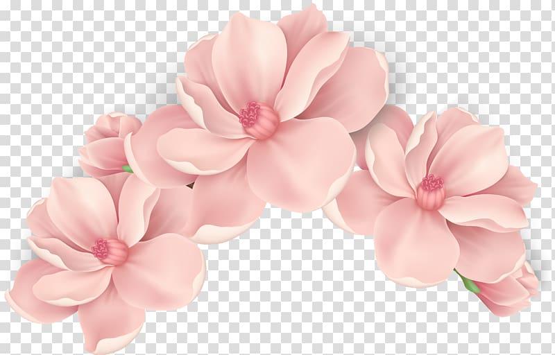 Three pink petaled flowers, Pink flowers Rose, flower.