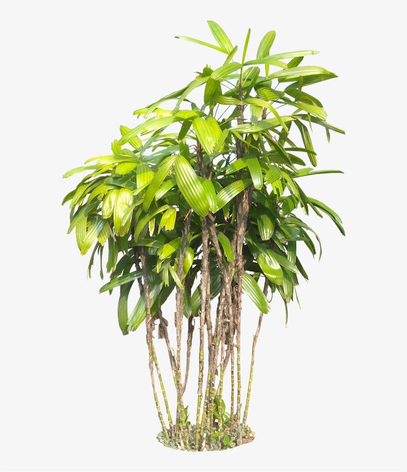 Tropical Plants Png (+).