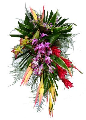 PNG GARDENER :: Port Moresby, Papua New Guinea.