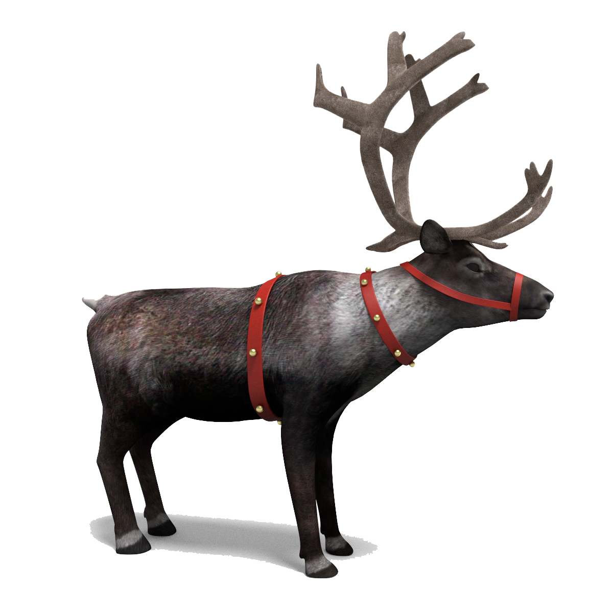 Download Reindeer PNG Picture.