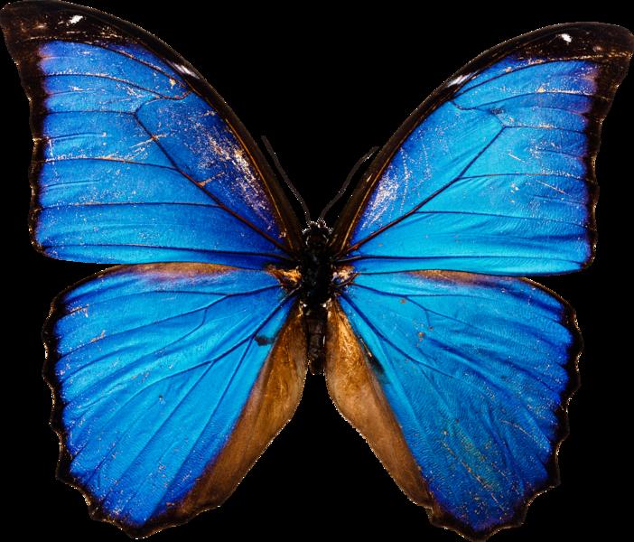 PNG Kelebek Resimleri, PNG Butterfly images, kelebek.