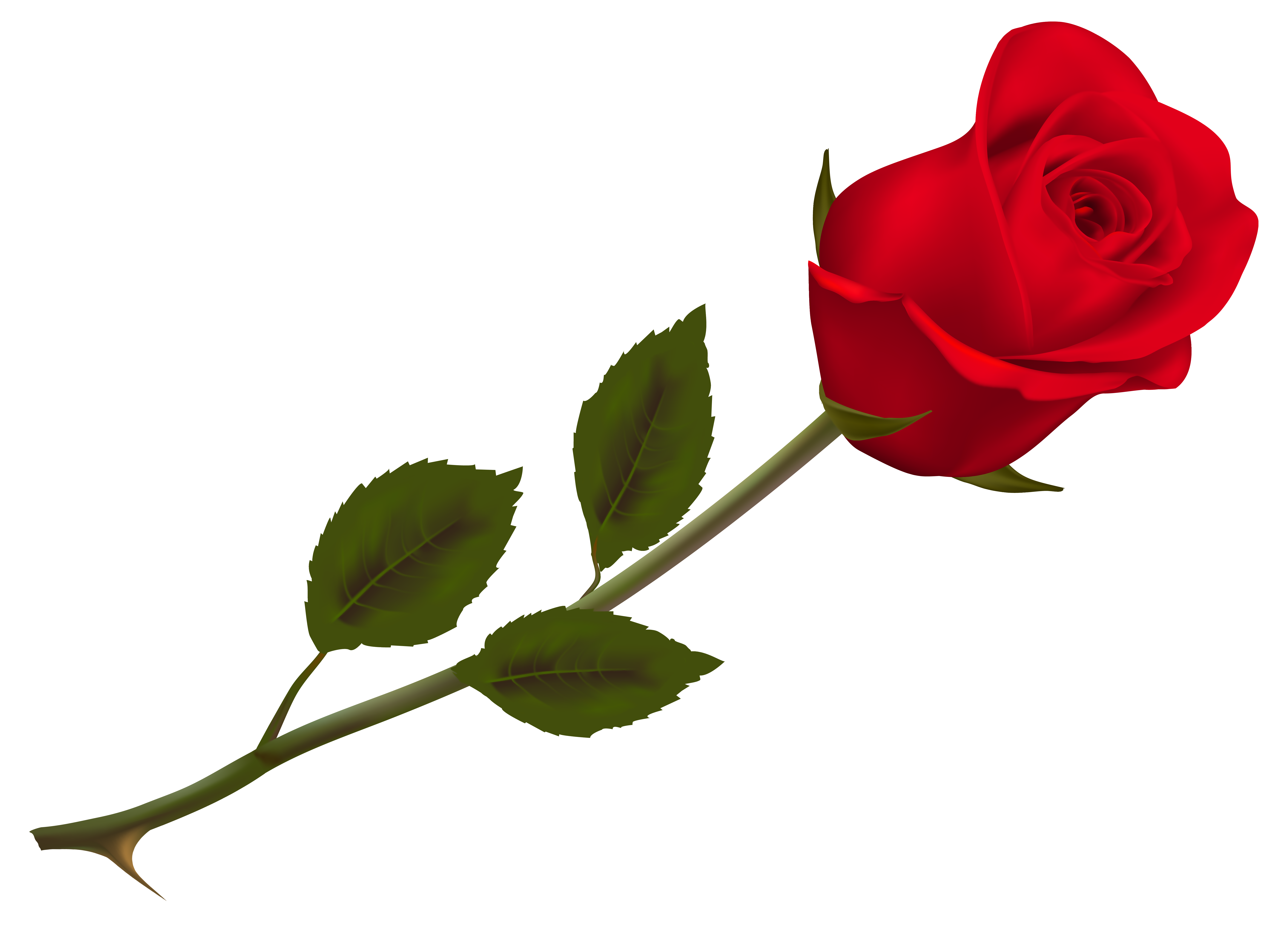 Transparent Beautiful Red Rose PNG Picture.
