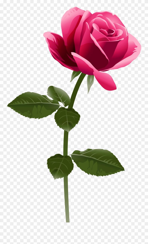 Pink Rose Png Clip Art Image.