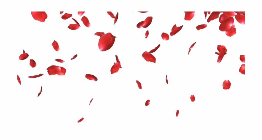 Falling Petals Png Picture.