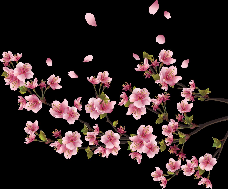 Sakura PNG Free Background.