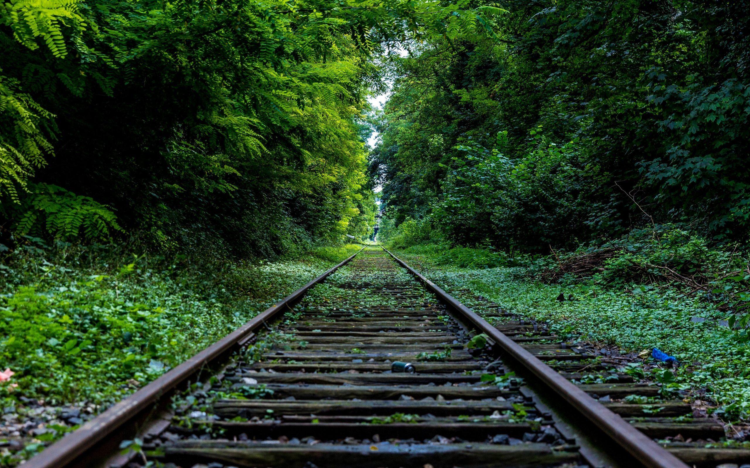Railtrack in Forest Scenery Wallpaper.