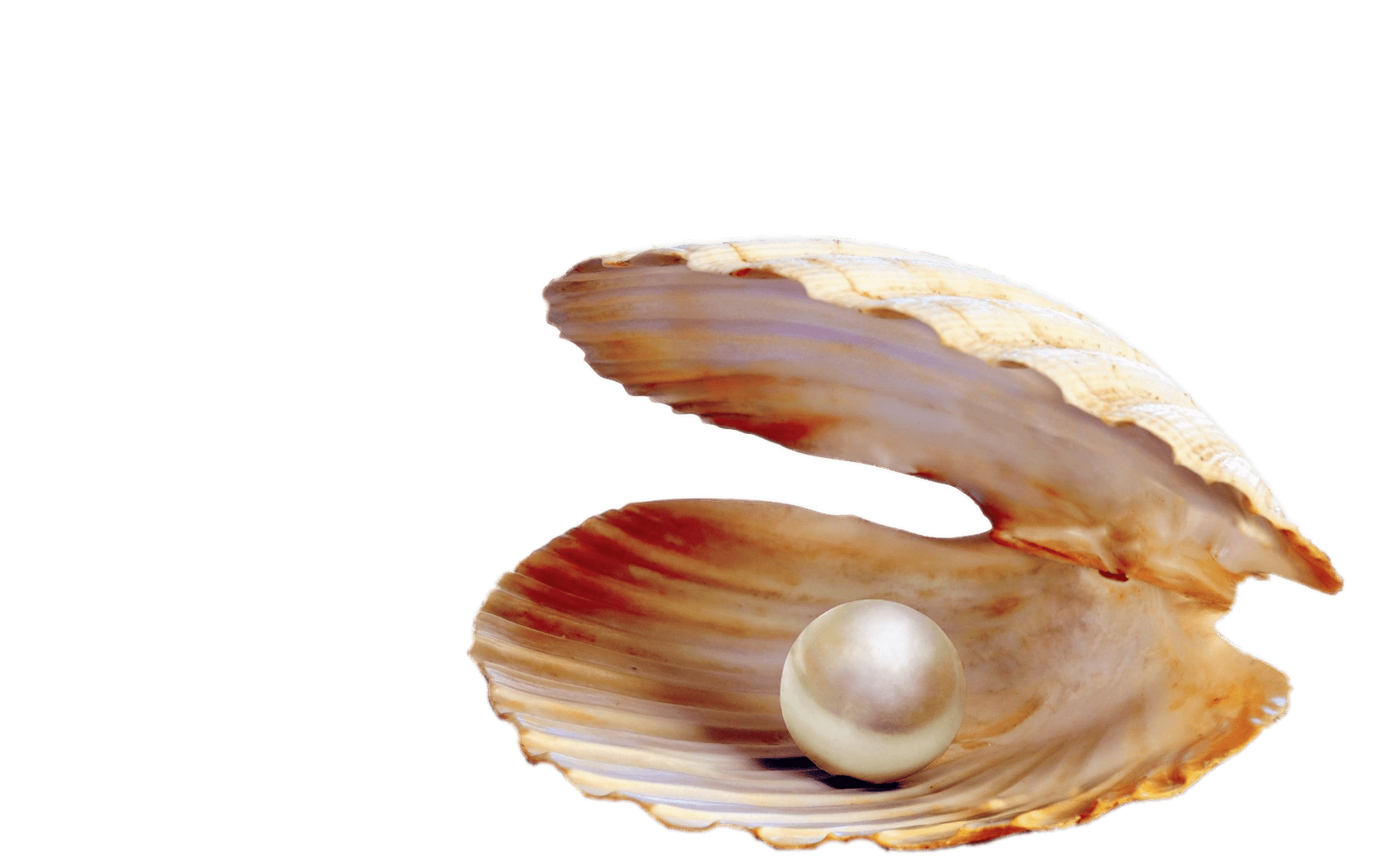 Pearl In Shell transparent PNG.