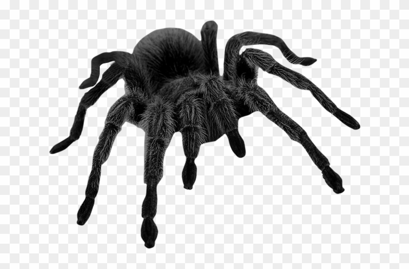 Haunted Black Spider Png Picture.