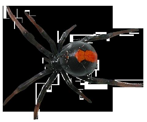 Spider PNG Transparent Images.